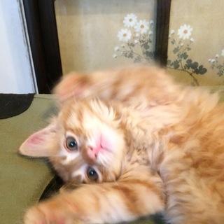 兄弟子猫に新しい家族を探しています