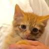 美しい4兄弟子猫に新しい家族募集中 サムネイル5