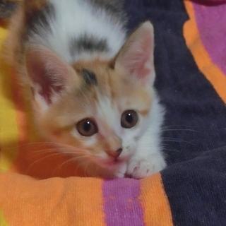 【舞妓】TNRのため保護した猫さんが生みました。