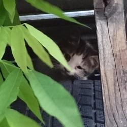 《緊急》生後2ヶ月の子猫の捕獲方法