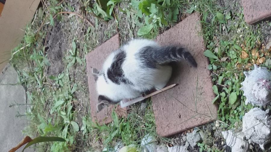 捕まえ 方 野良猫