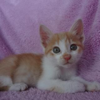 大らかで甘えん坊な性格のお兄ちゃん猫です