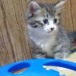 6月19日(日)三重県桑名市 第57回リトルパウエイド猫の譲渡会