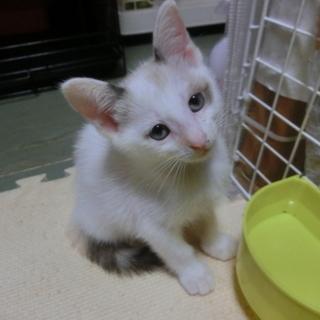 【ふらの】TNRのため保護した猫さんが生みました。