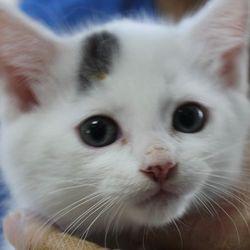 リトルパウエイド猫の譲渡会IN桑名市