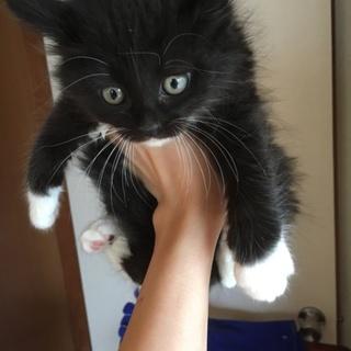 ふわふわ☆黒猫子猫