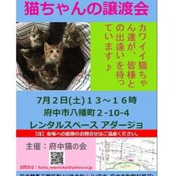 【府中猫の会】猫ちゃん達の譲渡会を開催します♪(7月2日(土)13~16時、@府中)。