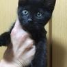 離れない黒猫