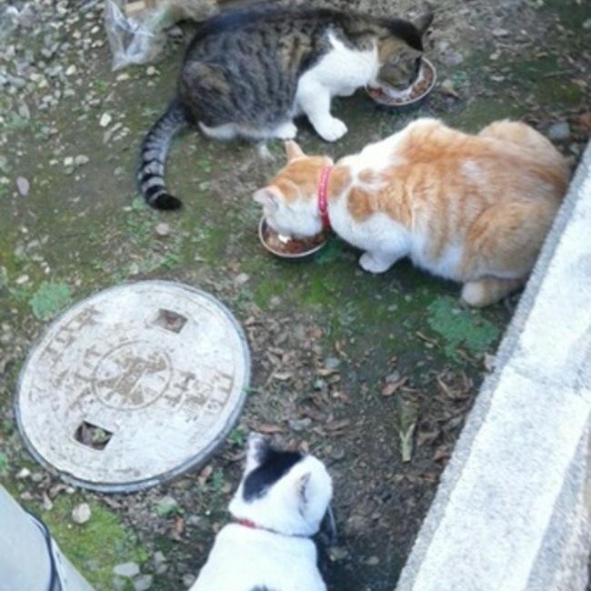 地域猫活動団体 ウイングのカバー写真