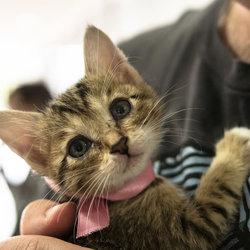 三好ネコの会「子猫まつり第2弾」