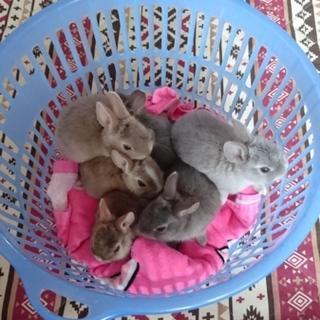 ミニウサギの里親さん募集です!