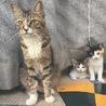 親子猫3匹、一緒に暮らせるおうち探しています