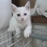 綺麗な白猫