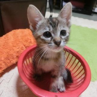 【出雲】保護した猫が産みました。