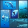 dolphin♪