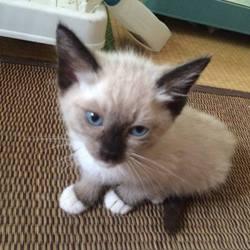 猫の里親譲渡会〝主に子猫編〟