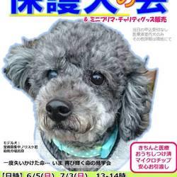 GO!保護犬GO 保護犬の会in横浜 冷房完備