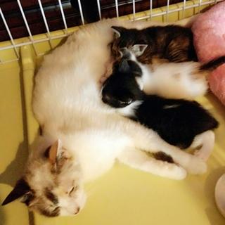 授乳期の3兄妹と若いママ猫