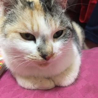 2匹の猫ちゃん (ミミ/ポポ)♀