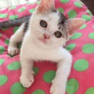 ほんわかおっとり猫さん・・・ウーちゃん2ヶ月