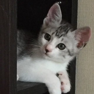 おっとり美猫の・・・カーくんです。