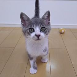 きーちゃんち「猫の譲渡会」