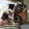 再 生後3ヶ月の三毛猫☆彡.。 サムネイル7