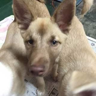 尾道市因島から仔犬の優しい家族募集