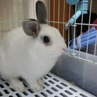 ミニウサギ(名前  ユキ)