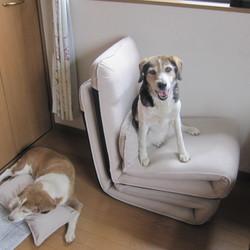 犬の床ずれ(褥瘡)完治