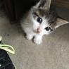 可愛い子猫のママになってあげて下さい。