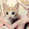 甘えんぼうの瞳がキレイな猫ちゃん
