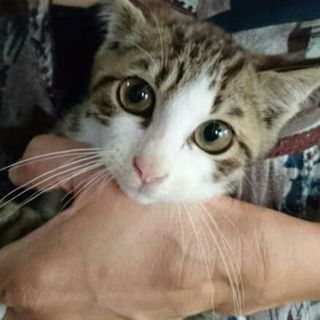 可愛い猫です。飼い主さんになってください。