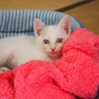 ブルーアイの白猫さん姉妹