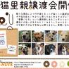 7月3日青山ファーマーズマーケットにて譲渡会開催