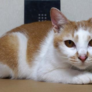 江戸川区多頭飼育崩壊現場から救出した、白玉ちゃん