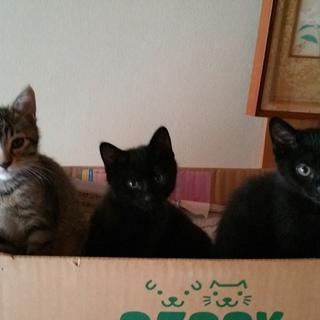 2匹の可愛い黒子猫兄妹です!