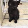 黒のしましまの仔猫です。