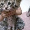 まだ小さい子猫ちゃん3匹(*^^*)