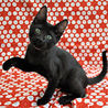 美しい黒猫★雷斗くん