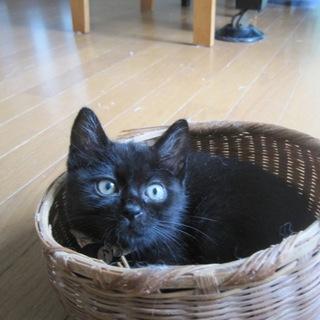 動画あり やんちゃな黒猫 まつこちゃん