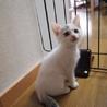人馴れ抜群美人子猫!