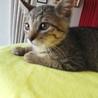 かわいい 仔猫の きじ太郎君 です・