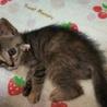 育児放棄された子猫のママになってくださる方募集!