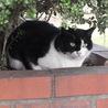 にっしん地域猫の会(保護活動者)