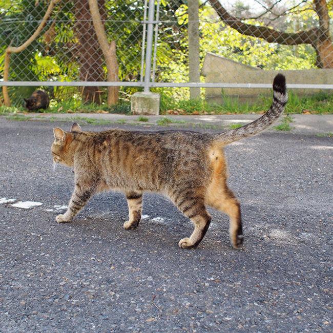 にっしん地域猫の会のカバー写真