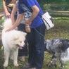 笑顔が可愛い秋田犬のソウタ 若いです。 サムネイル4