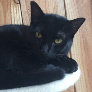 黒猫  ホーリー
