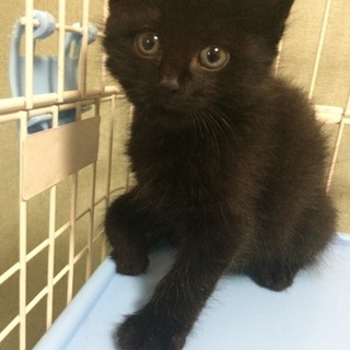 黒猫★キール