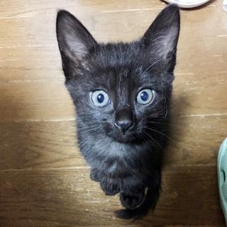 ごろごろな黒猫こうちゃん